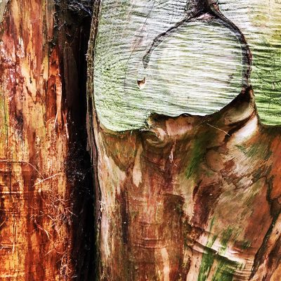 Tree_texture_Nature_photography