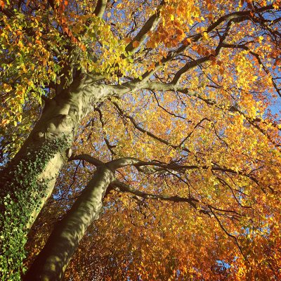 Autumn_Landscape_photography